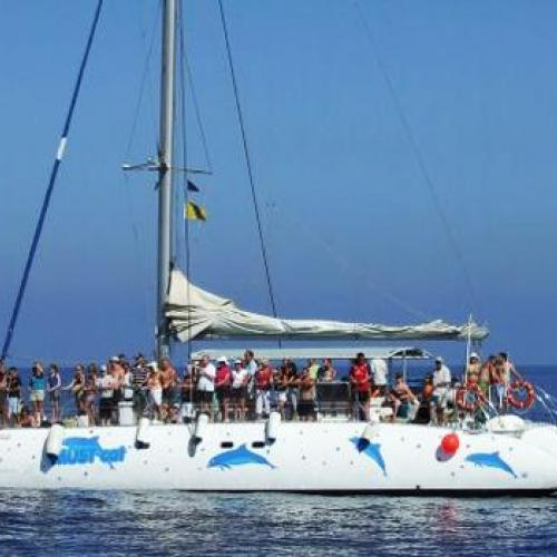 foto-dolphin-catamarn-royal-swim